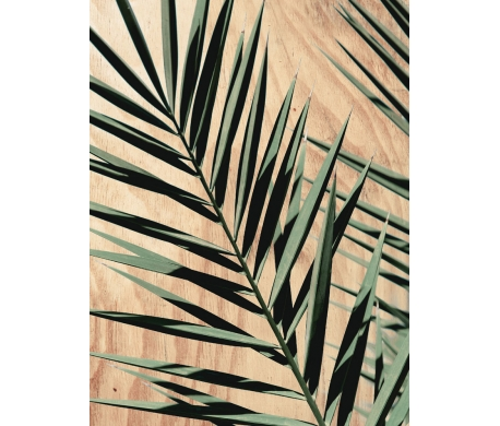Tableau Palma